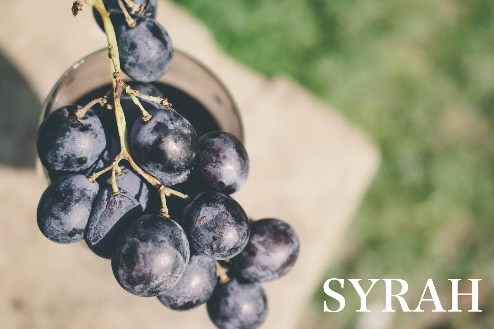 シラー(シラーズ)おすすめワインのメインビジュアルの画像