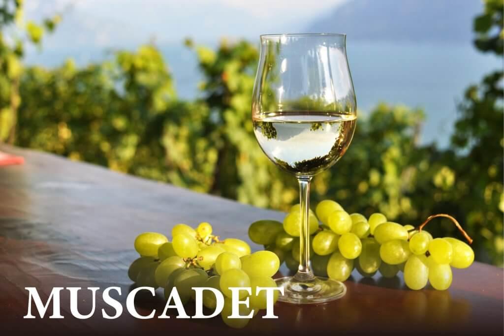 ミュスカデ(ワイン)のメインビジュアルの画像